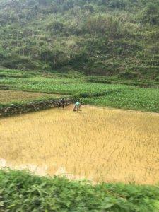 Harvesting in Asia